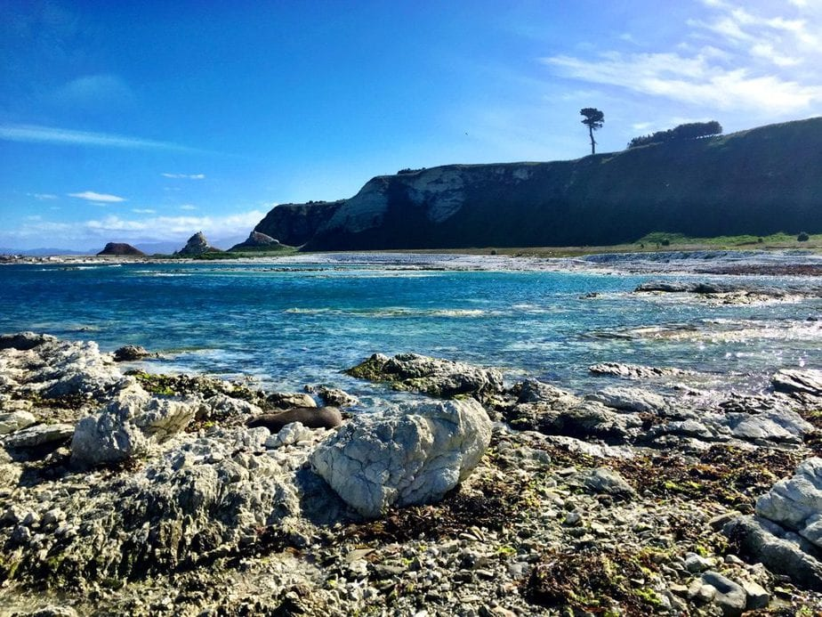 The Seal Colony in Kaikoura, NZ