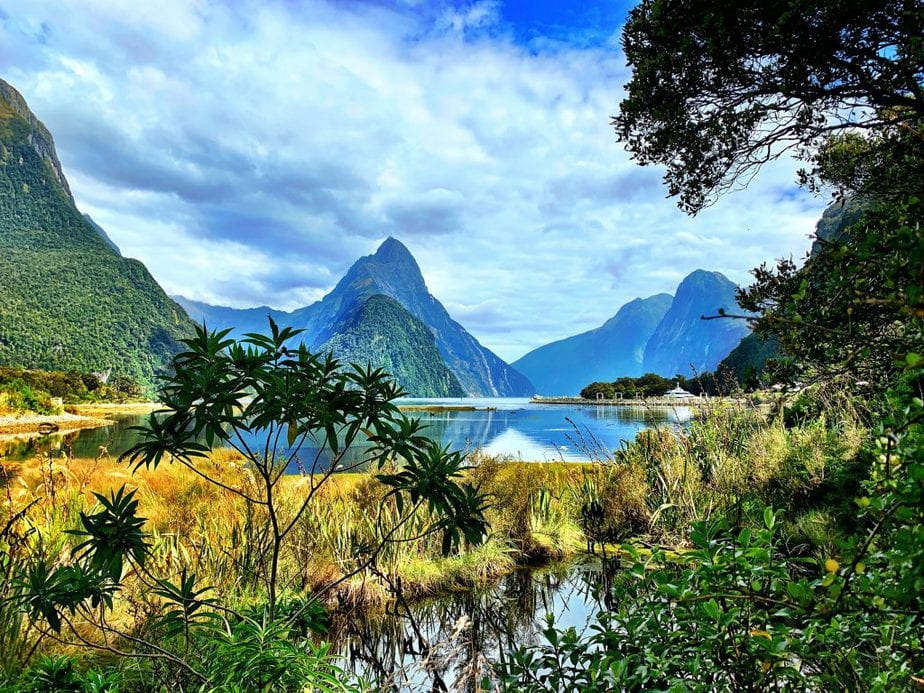The bush and trees framing the mountains and see of Milford Sound