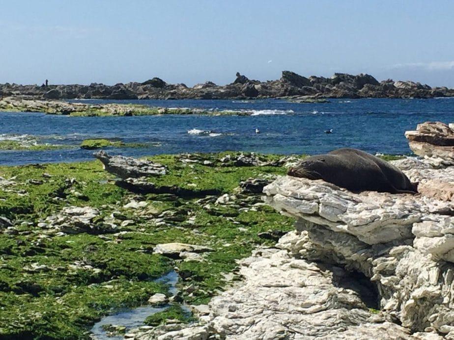 Seals sleeping on rocks that line the coast of Kaikoura