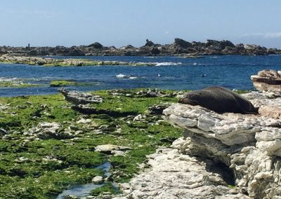 Seals sleeping on rocks that line the coast of Kaikoura
