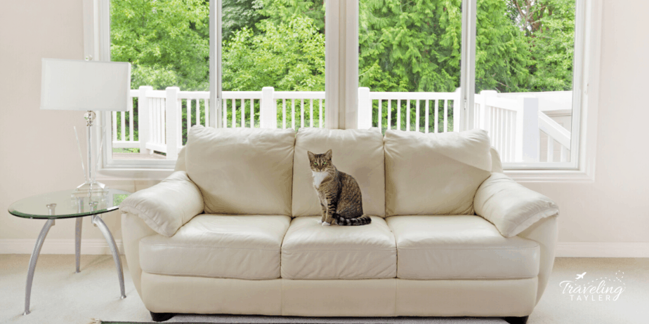 A cat sitting on a white couch inside a house